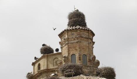 Alguns dels nius a l'església de Seròs.
