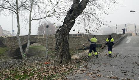 Agramunt inicia obres al pont Romànic per evitar danys per riuades