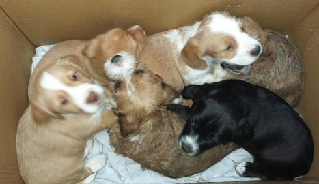 Imatge dels sis cadells trobats dins d'una caixa.