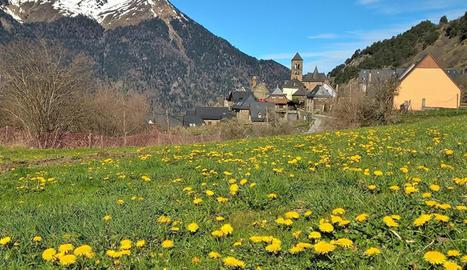 Camp de margarides al bonic poble de Vilamòs - Josep Castet