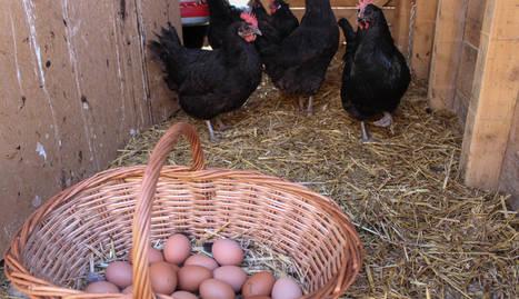família. La granja és també la casa de dos famílies, la del Xipi i la de l'Anna, que són socis i cunyats, a la imatge.