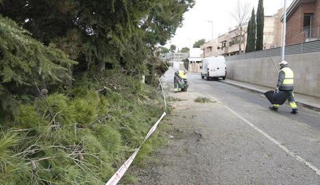 Treballs per esbrossar la calçada de la partida Boixadors per la caiguda d'un arbre.
