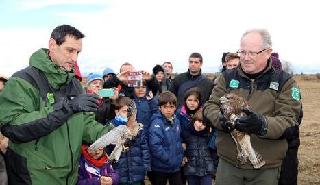 El moment de l'alliberament d'un aguiló i un xoriguer a l'estany d'Ivars i Vila-sana.