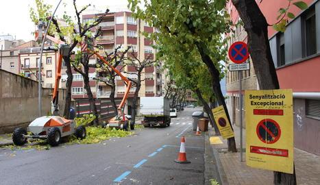 La poda dels arbres del carrer