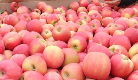 Recollida de pomes.