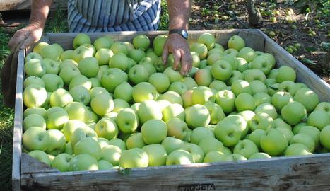 Recollida de poma.