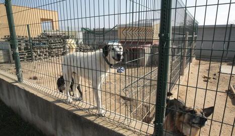 Les instal·lacions de la gossera, que ara té 57 gossos.