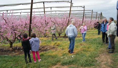 Promoció turística amb la floració de fruiters ■ L'ajuntament d'Alcarràs ha editat un vídeo amb el qual busca la promoció turística a través de la floració dels fruiters del municipi i que es divulga a través de les xarxes socials.