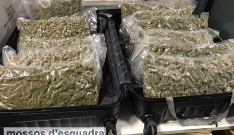 Les bosses amb marihuana que la detinguda portava a la maleta intervinguda pels Mossos.
