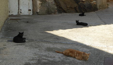 Gats descansant a l'ombra en un carrer de Vilaller, a l'Alta Ribagorça.