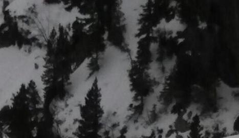 Imatge d'un dels óssos que s'han pogut veure  les últimes setmanes a Aran.