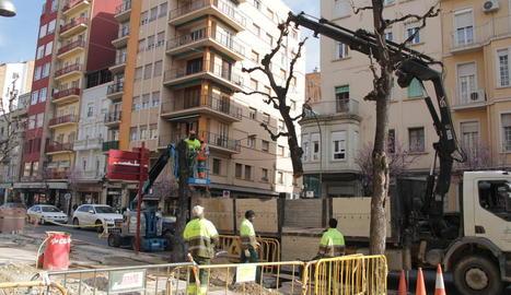 Talen arbres de Balmes per a la construcció del carril bici