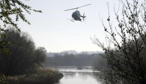 Un helicòpter ha fumigat aquest divendres el riu Segre.