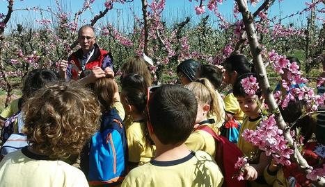 Comencen les visites als camps de fruiters florits a Aitona