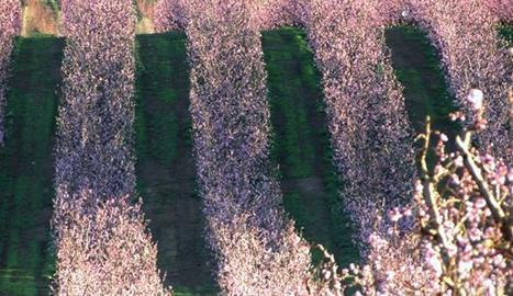 Una de les imatges que veurem a Espai Terra.