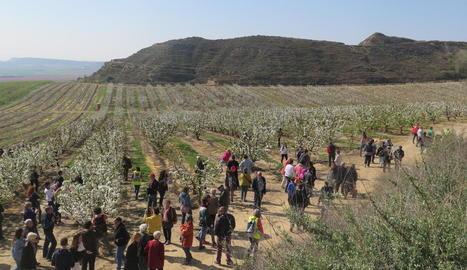 Alcarràs, Aitona i Torres de Segre mostren els seus arbres florits