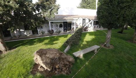 El vent fa caure un arbre al cementiri de Torrefarrera