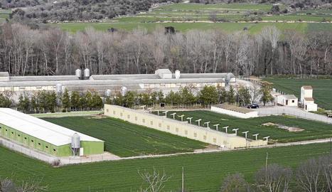 Vista de la granja industrial en la qual va invertir Johan Cruyff al terme municipal de Foradada.