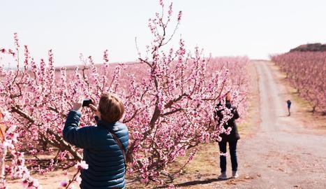 Turistes fent fotos als camps de fruiters d'Aitona.
