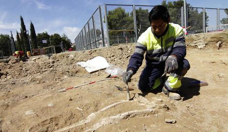 Un esquelet trobat al parc de Santa Cecília.