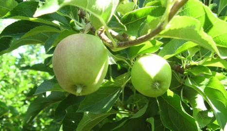 Un arbre fruiter