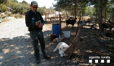 Imatge del gos, que portava xip, al costat del corral.