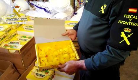 Un agent mostrant els pollets intervinguts.