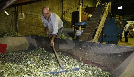 Recollida d'oliva en una cooperativa.