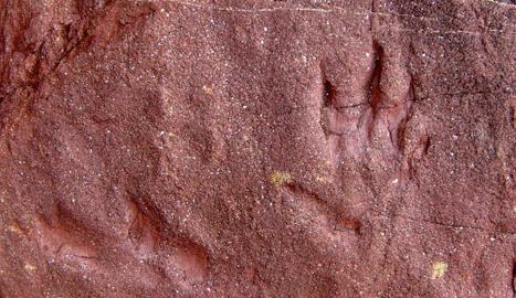 Una imatge d'una de les petjades