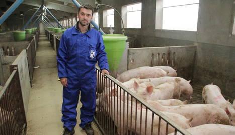 Lluís Baró, a la granja de porcs a Balaguer.
