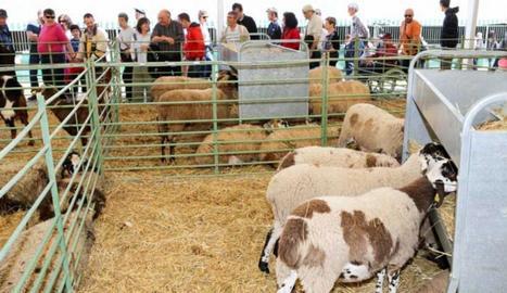 La mostra de ramaderia de la Fira en la passada edició.