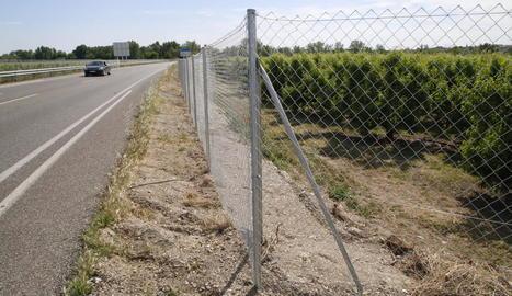 Mig quilòmetre de camp clos als dos marges de la carretera C-12 per evitar el pas de senglars.