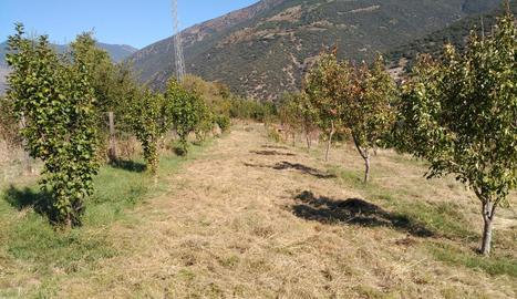 El viver impulsat pel consell comarcal del Sobirà compta amb vint-i-dos varietats de fruiters