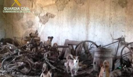 Alguns els gossos que es trobaven tancats a l'explotació