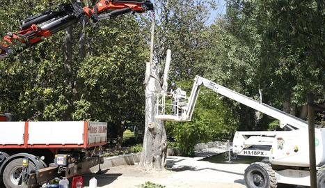 Tala d'un altre gran arbre als Camps Elisis