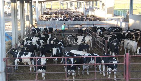Una granja de vaques.