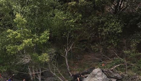 Voluntaris van retirar dijous l'arbre caigut al riu.