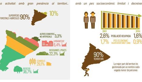 Detall d'una de les infografies