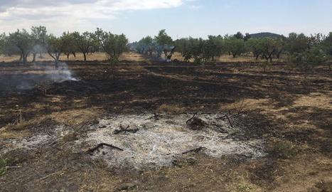 Imatge de l'incendi de Cervià de les Garrigues.