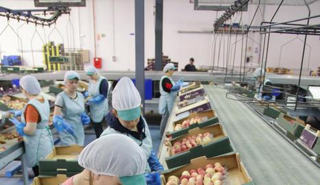 Treballs d'envasament de paraguaians, ahir a Seròs Fruits.