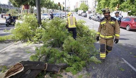 Els Bombers van retirar l'arbre i la Guàrdia Urbana va haver de regular el trànsit ahir a Blondel.