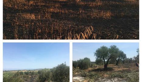 Imatges dels incendis registrats a Arbeca i el Cogul.