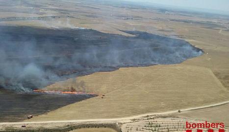 Fins a 70 hectàrees calcinas per un foc en camps agrícoles a Artesa de Lleida