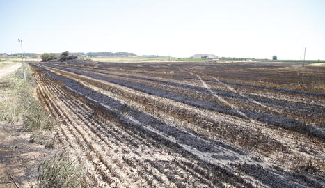 Un incendi de cultius aquest cap de setmana a Almenar-