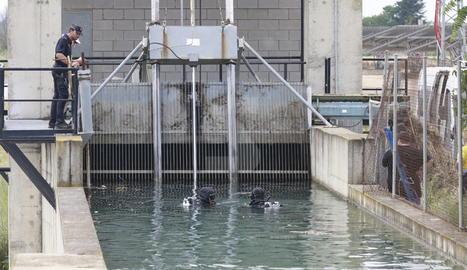 Submarinistes dels Mossos, aquest matí, a la zona del canal on ha aparegut el cadàver.