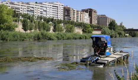 Els treballs per retirar les algues van començar dimarts.