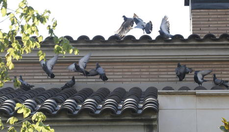 La façana d'una casa de Ciutat Jardí, amb diversos coloms ahir.