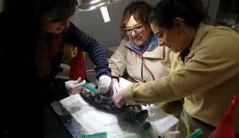 Professionals del centre de fauna atenen un animal.