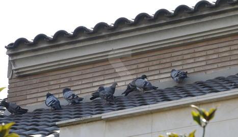 La façana d'una casa de Ciutat Jardí, amb diversos coloms aquest dilluns.