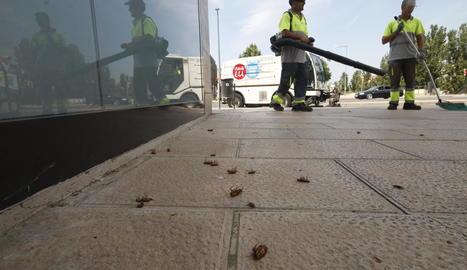 Operaris d'Ilnet van retirar ahir de les voreres els insectes morts arran de la fumigació.